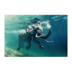 ELEPHANT kép, 120*80 cm