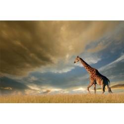 GIRAFFE kép, 120*80 cm