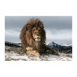 LION kép, 120*80 cm